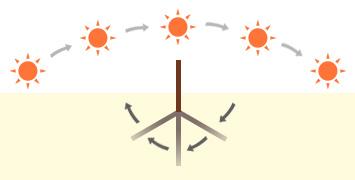 地面に立てたグノモンの作る影(イメージ)
